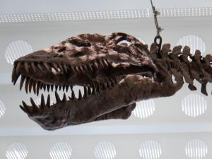 プレシオサウルス(複製) Tharassomedon haningtoni (cast)